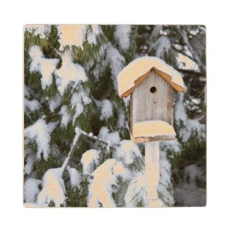 冬の松の木の近くの巣箱 ウッドコースター
