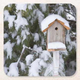 冬の松の木の近くの巣箱 スクエアペーパーコースター