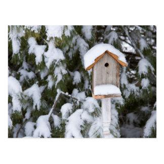 冬の松の木の近くの巣箱 ポストカード