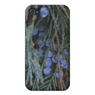 冬の果実のIphone 4/4s Speckの場合 iPhone 4/4S Case