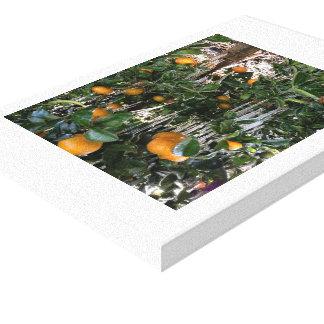 冬の柑橘類のオレンジ木 キャンバスプリント