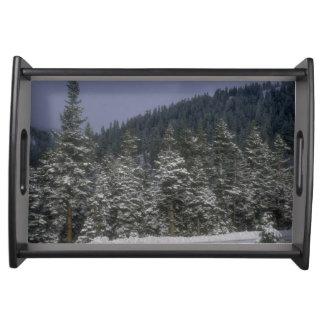 冬の森林トレイ トレー