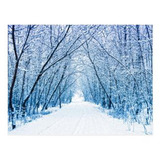 冬の森林道 ポストカード