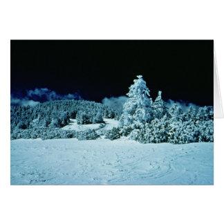 冬の森林 カード