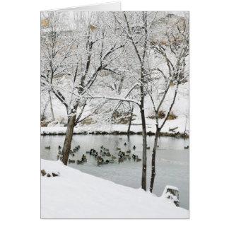 冬の池の休日カード カード