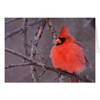 冬の熟視 カード