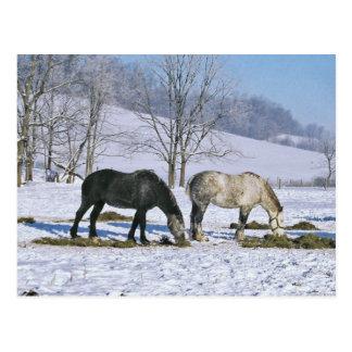 冬の牧草地郵便はがきのアマン派のばん馬 ポストカード