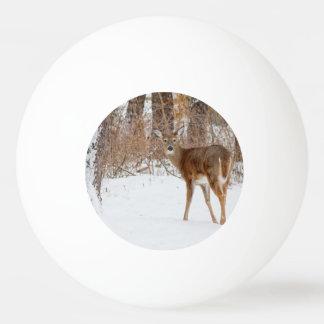 冬の白いSnowy分野のボタンの木びき台のシカ 卓球ボール