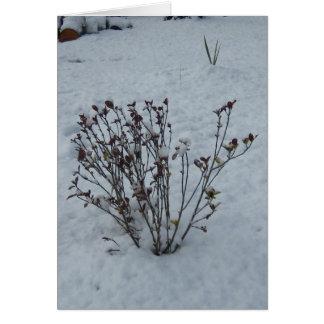 冬の群葉 カード
