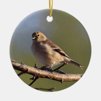 冬の羽のアメリカのgoldfinch セラミックオーナメント