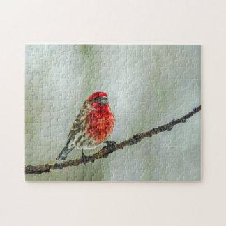 冬の赤の鳥のツリーブランチのムラサキマシコ ジグソーパズル