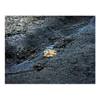 冬の路傍の葉 ポストカード