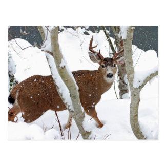 冬の雪のシカの木びき台 ポストカード