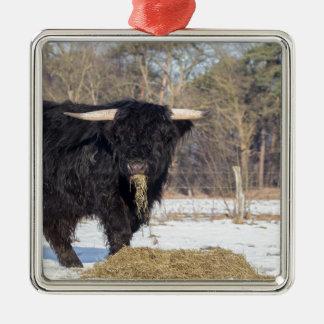 冬の雪のスコットランドの高地居住者の雄牛の食べ物の干し草 メタルオーナメント