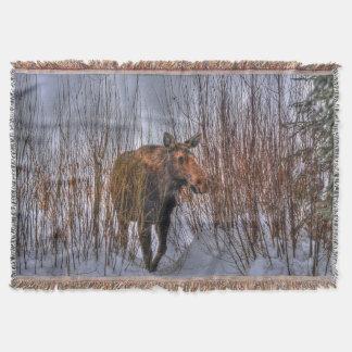 冬の雪Iの野生のカナダのアメリカヘラジカ スローブランケット