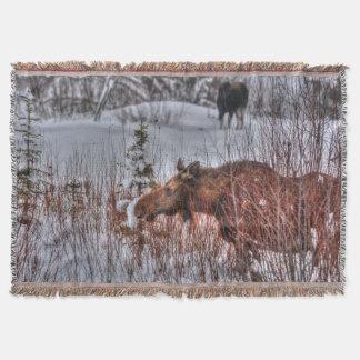 冬の雪Iの2匹の野生のカナダのアメリカヘラジカ スローブランケット