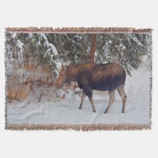 冬の雪IVの野生のカナダのアメリカヘラジカ スローブランケット