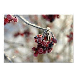 冬のbeery写真 写真プリント
