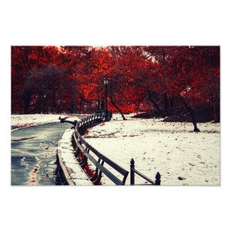 冬はセントラル・パーク、NYCの秋に会います フォトプリント