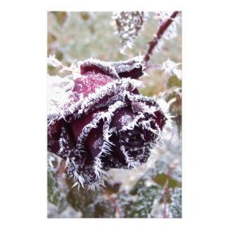 冬バラ 便箋