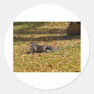 冷えること動物園アトランタで ラウンドシール