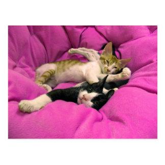 冷たいビル-最高をリラックスして下さい-かわいい猫 ポストカード