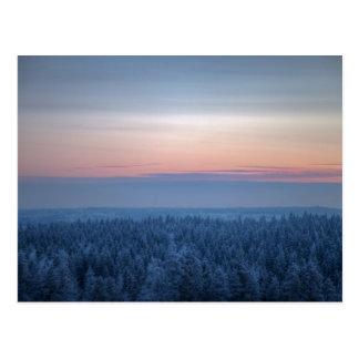 冷たい冬の夕べの密な森林 ポストカード
