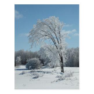 冷たい冬の木 ポストカード