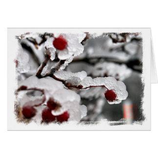凍らされた果実 カード