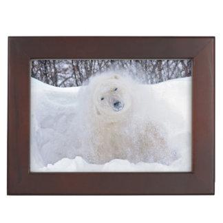 凍結するツンドラの雪を揺すっている白くま ジュエリーボックス