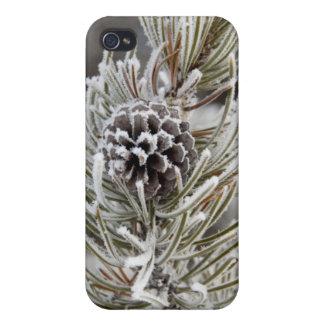 凍結するマツ円錐形、イエローストーンのクローズアップ iPhone 4/4Sケース