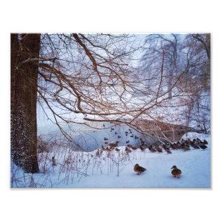 凍結する池のまわりのアヒルのギャザー フォトプリント