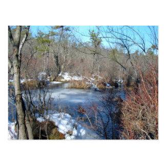 凍結する沼地の池 ポストカード