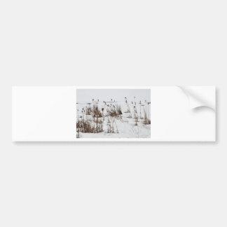 凍結する湖のホタルイ バンパーステッカー