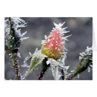 凍結する芽 カード