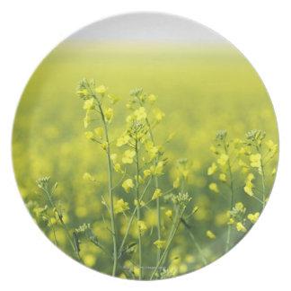 分野で開花するCanola プレート