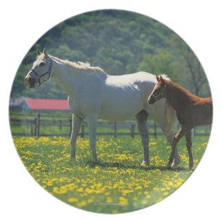分野に立っている馬および彼女の子馬 プレート
