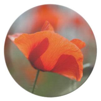 分野の共通のケシの花 プレート