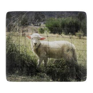 分野の塀の後ろの小さく白い子ヒツジ カッティングボード