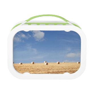 分野の干し草ベール ランチボックス
