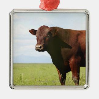 分野の肉用牛 メタルオーナメント