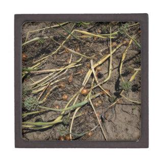 分野の臭いタマネギの穀物 ギフトボックス