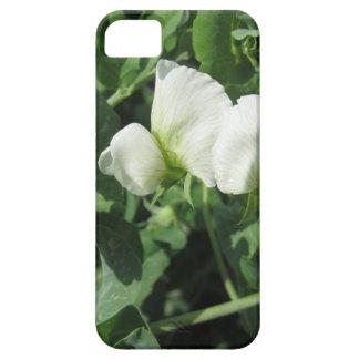 分野の花盛りの豆の木。 タスカニー、イタリア iPhone SE/5/5s ケース