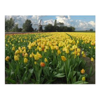 分野オランダの黄色いチューリップ ポストカード