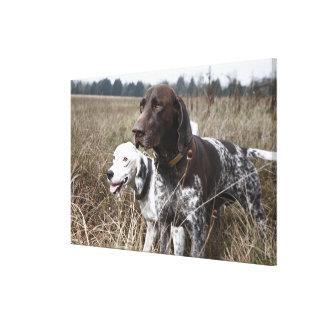 分野、ヒューストン、テキサス州、米国の2匹の犬 キャンバスプリント
