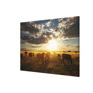 分野、日没の牛 キャンバスプリント