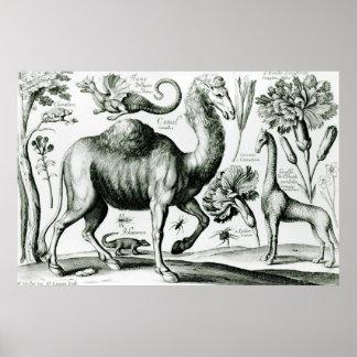 刻まれる動物および花の勉強 ポスター