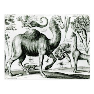 刻まれる動物および花の勉強 ポストカード