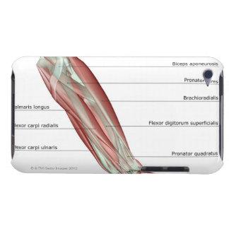 前腕Musculoskeleton Case-Mate iPod Touch ケース