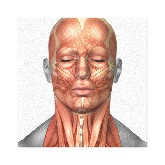 前部人間の顔および首筋肉の解剖学 キャンバスプリント